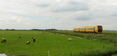 Koeiengeloei en schapenstront
